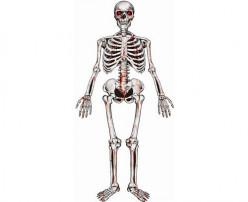 Decoração Esqueleto Suspenso